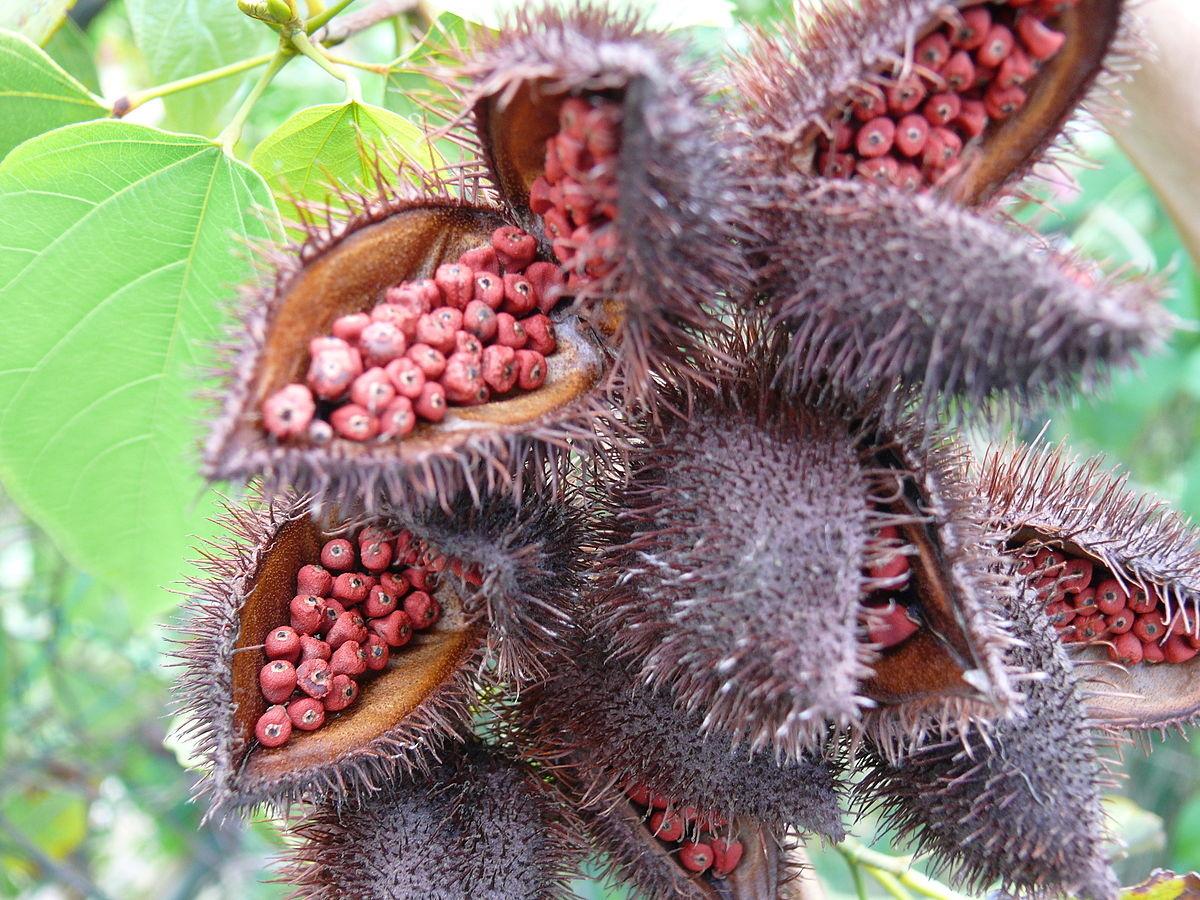 семена аннато