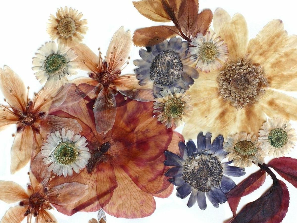 сухоцветы для мыла с нуля