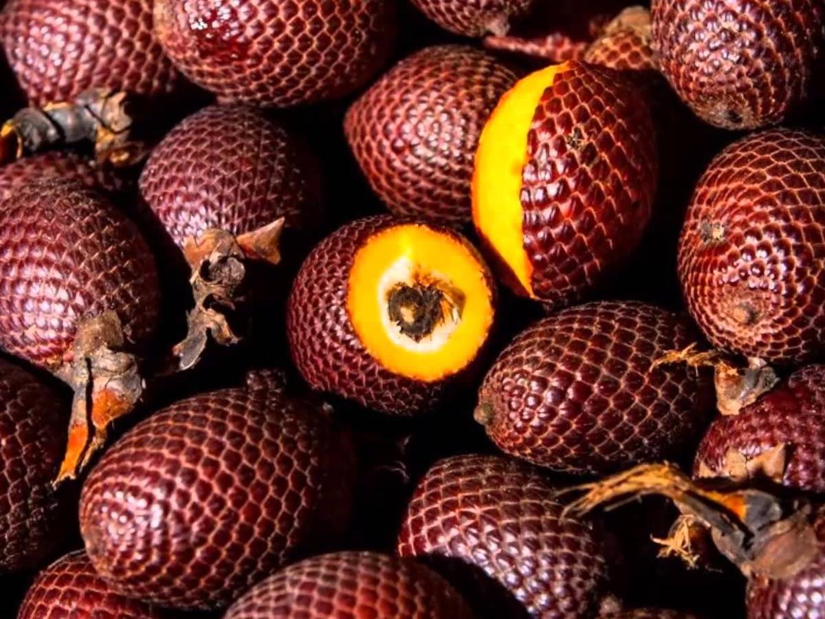 плоды бурити масло маврикий